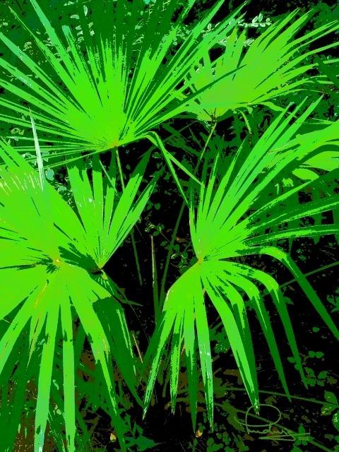 Scrub Palm